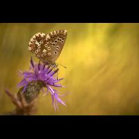blaeuling301_mf_181.jpg (Artengalerie)