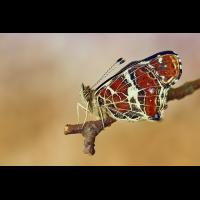 dsc_8854_121.jpg (Artengalerie)