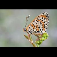 dsc_4858_170.jpg (Artengalerie)