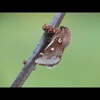 lumix_10_114.jpg (Artengalerie)