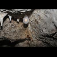 33_Höhlenspinne_Feine_6_Kopie.jpg (Artengalerie)