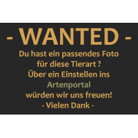 Wanted~1.jpg (Artengalerie)