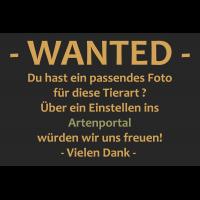 Wanted~9.jpg (Artengalerie)