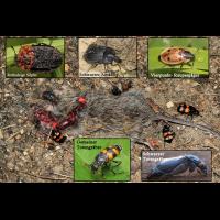 Aaskäfer-Übersicht-web.jpg (Artengalerie)