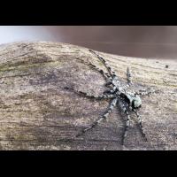 spinne02-2.jpg (Artengalerie)