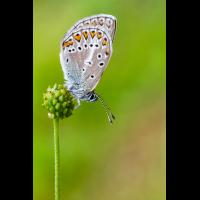 20140709-IMG_5587-b.jpg (Artengalerie)