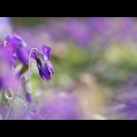 P1020802A.jpg (Gartenspitz)