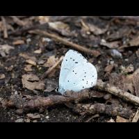 Schmetterling.jpg (Steffen123)