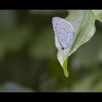 Schmetterling 2.jpg (Steffen123)