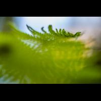 _D813479.jpg (Herzogpictures)