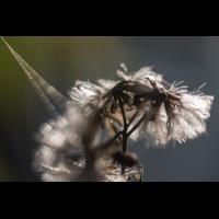 _D813504-2.jpg (Herzogpictures)