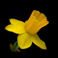 PMax 0599-0831-2.jpg (Herzogpictures)
