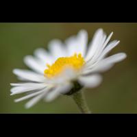 _D819000.jpg (Herzogpictures)