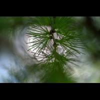 _D816414.jpg (Herzogpictures)