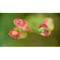 _D816052.jpg (Herzogpictures)