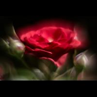 _D817283.jpg (Herzogpictures)