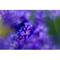 _D817309.jpg (Herzogpictures)