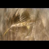 _D817613.jpg (Herzogpictures)