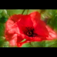 _D817663.jpg (Herzogpictures)