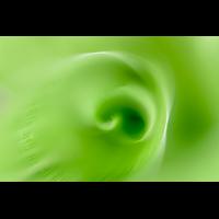 _D818650.jpg (Herzogpictures)