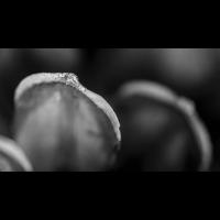 _D818866.jpg (Herzogpictures)