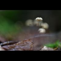 _D816973.jpg (Herzogpictures)