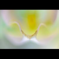 _D812018.jpg (Herzogpictures)
