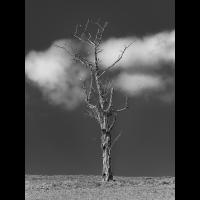 _D811473.jpg (Herzogpictures)