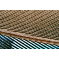 Feather from the jay, 10x magnification.jpg (Sasscha)