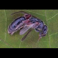 Ant queen.jpg (Sasscha)