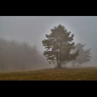 Im Nebel.jpg (Il-as)