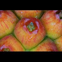 Cornus-kousa-chinensis_Fruchtkörper.jpg (MakroMax)