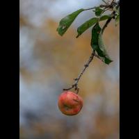1 Apfel.jpg (Wienerin)