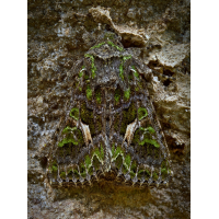 Camouflage.jpg (Adi Zett)